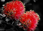 Aotearoa Metal Prints - Pohutukawa Tree Metal Print by motography aka Phil Clark