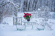 Poinsettia In The Snow Print by Alana Ranney