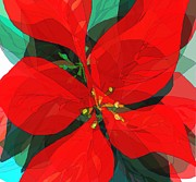 Navo Art - Poinsettia