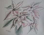 Paula Peltier - Poinsettias