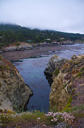 Tom Kelly - Point Lobos 5096