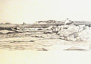 Seagull Drawings Originals - Point Loma by Howard Elliott