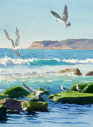 Seagulls Posters - Point Loma Rocks Waves and Seagulls Poster by Mary Helmreich