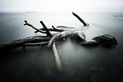 Jakub Sisak - Point Place Driftwood