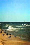 Sea Birds Prints - Pointed into the Wind Print by Michelle Calkins