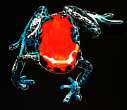 Frog Mixed Media Originals - Poison dart frog by Mike Durco