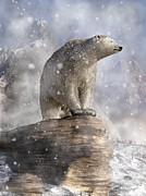 Daniel Eskridge - Polar Bear in a Snowstorm