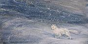 Snow Storm Paintings - Polar Storm II Arctic Fox by Patricia Henderson