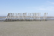 Natuur Photos - Poles on the sandbar by Ronald Jansen