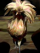Farm Mixed Media - Polish Chicken 3 by Karen Sheltrown