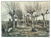Flock Of Sheep Prints - Pollarded Birches with Woman and Flock of Sheep Print by Vincent van Gogh