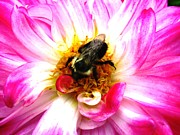 Pollination Nation 2 Print by Will Boutin Photos
