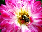 Kitchen Photos Prints - Pollination Nation 4 Print by Will Boutin Photos