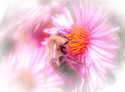 Haze Digital Art Prints - Pollination Nation Print by Optical Playground By MP Ray
