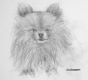 Jim Hubbard - Pomeranian Dog