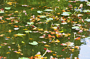 Lilly Pond Paintings - Pond 2 by Lanjee Chee