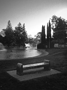 Outdoor Theater Prints - Pond and Bench at Land Park Print by Patrick Cosgrove
