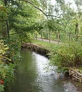 Kristine Bogdanovich - Pond