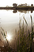 Peaceful Scene Metal Prints - Pond Metal Print by Les Cunliffe