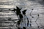 Frank Romeo - Pond Silhouette