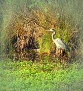 Joyce Dickens - Pond Wildlife