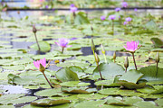 JPLDesigns - Pond with Pink Water...