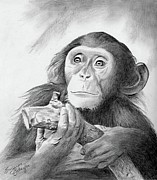 Wildlife Art Drawings Posters - Pondering Chimpanzee Poster by Suzanne Schaefer