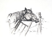 Fences Drawings Prints - Pondering My Escape Print by James Skiles
