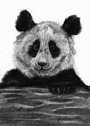 Bear Paw Drawings - Pondering Panda by J Ferwerda
