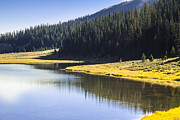 Yellow Posters - Pondre Lake at Rocky Mountain National Park Poster by Ellie Teramoto