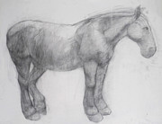 Anatomy Drawings - Pony by Cynthia Harvey