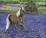 Dana Spring Parish - Pony in the Bluebonnets