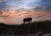 Grazing Horse Posters - Pony on the Dunes Poster by Betsy A Cutler East Coast Barrier Islands