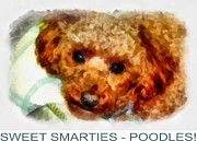 Dogs Digital Art Originals - Poodle Poster by Betsy Cotton