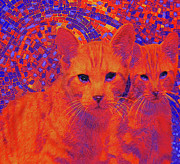 Kittens Digital Art Prints - Pop Art Cats Print by Jane Schnetlage