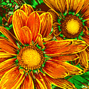 Pop Art Daisies 8 Print by Amy Vangsgard