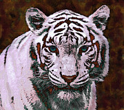 Tiger Digital Art Prints - Popart White Tiger- Larger Print by Jane Schnetlage