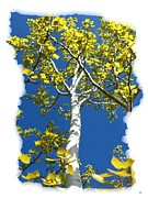 Will Borden Framed Prints - Poplar Tree In Spring  Framed Print by Will Borden