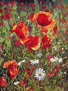 Poppy Field Paintings - Poppie and Daisies by David Stribbling