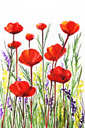 Plant Greeting Cards Painting Prints - Poppies and Lavender  Print by Irina Sztukowski