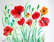 Botanic Drawings - Poppies and poppies by Roberto Gagliardi