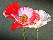 Nature Study Art - Poppies  by Chris Berry
