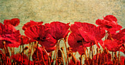 Claudia Moeckel - Poppies