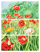 Modern Realism Posters - Poppies Collage II Poster by Irina Sztukowski