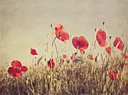 Texture Floral Digital Art Posters - Poppies Poster by Diana Kraleva