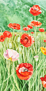 Orange Poppy Paintings - Poppies Impressions I by Irina Sztukowski