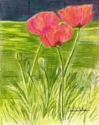 Lou Belcher - Poppies