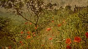 Rick Todaro - Poppies On High Hillside