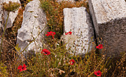 Delos Prints - Poppies on the Temple Island of Delos Greece Print by Brenda Kean