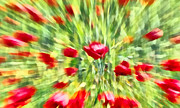 Poppies Field Paintings - Poppies swirl 1 by George Rossidis
